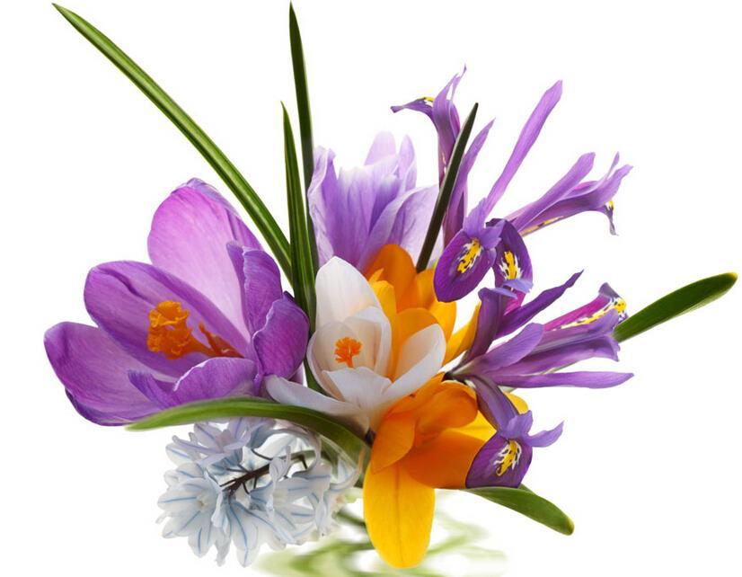 Saffron Seeds Saffron Flower Seeds Saffron Crocus Seeds It Is Not